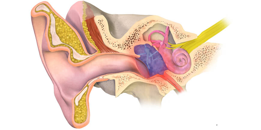 Ear infection & Medicinal Mushrooms