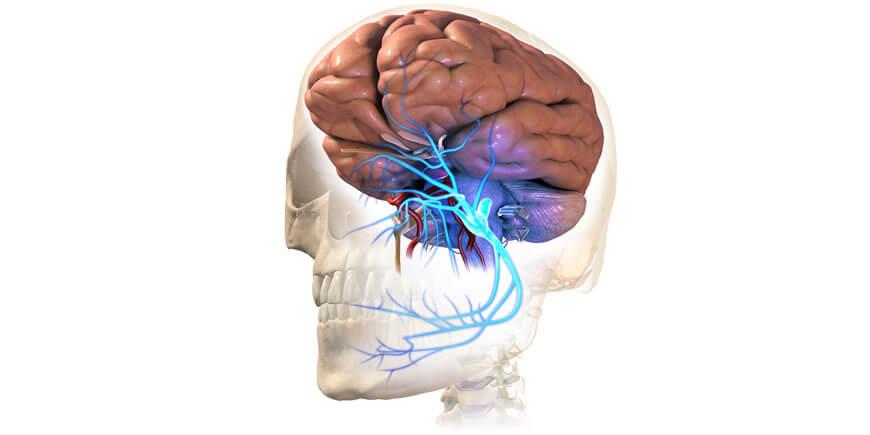 Facial Neuralgia & Medicinal Mushrooms
