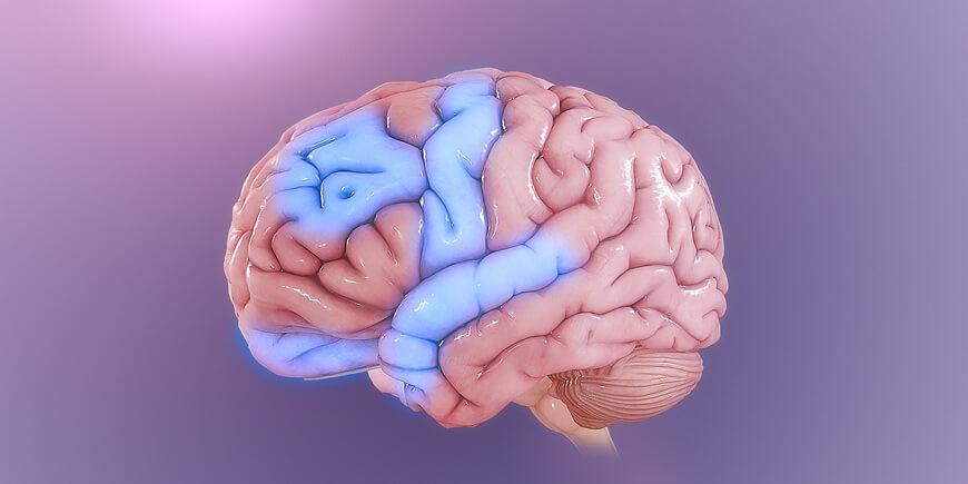 Obsessive Compulsive Disorder and Medicinal Mushrooms